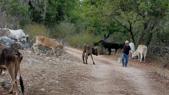 Mortandad de ganado enciende los 'focos rojos' en el valle de la región