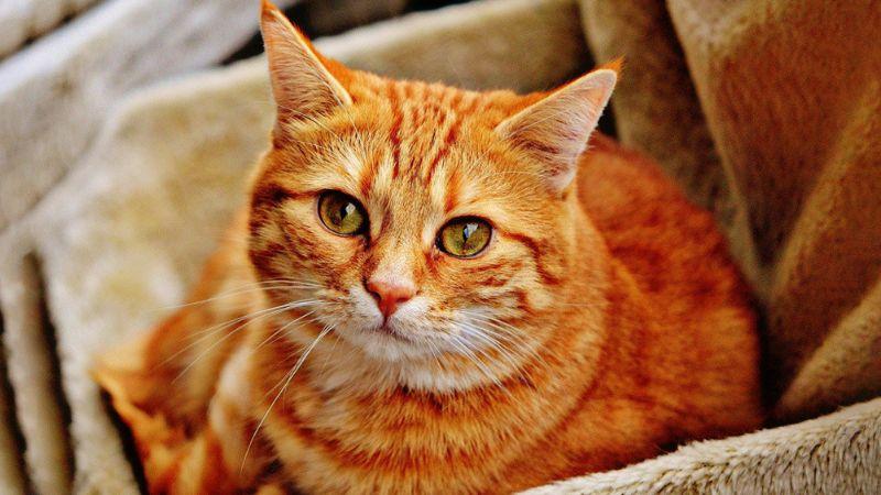 ¿Tienes un gato en casa? Estas curiosidades sobre su alimentación te sorprenderán