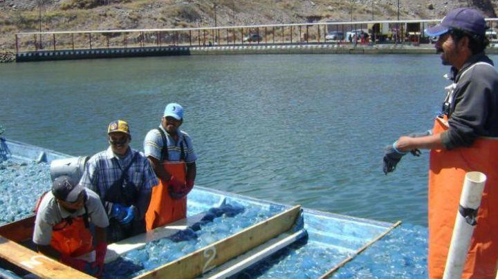 'Aguamaleros' del Puerto de Guaymas buscan tener certificación