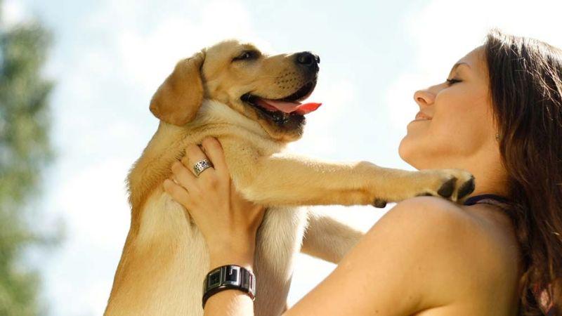 ¡Ten cuidado! Estas son las cosas que  podrían acortar la vida de tu amado perro