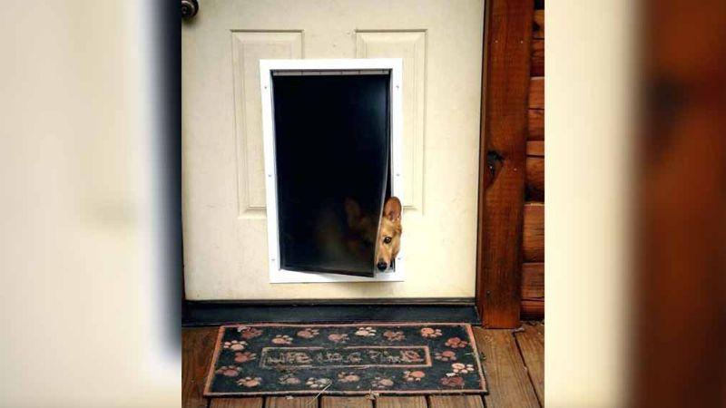 Delincuente intenta irrumpir en casa semidesnudo y por la puerta del perro