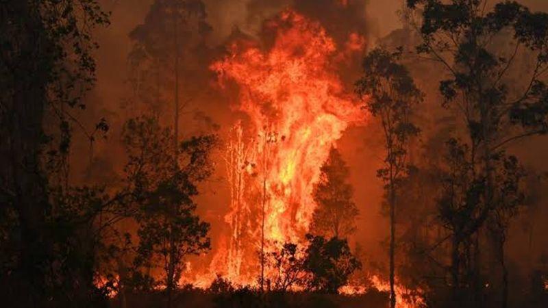 Incendios forestales en Australia dejan 29 muertos hasta el momento