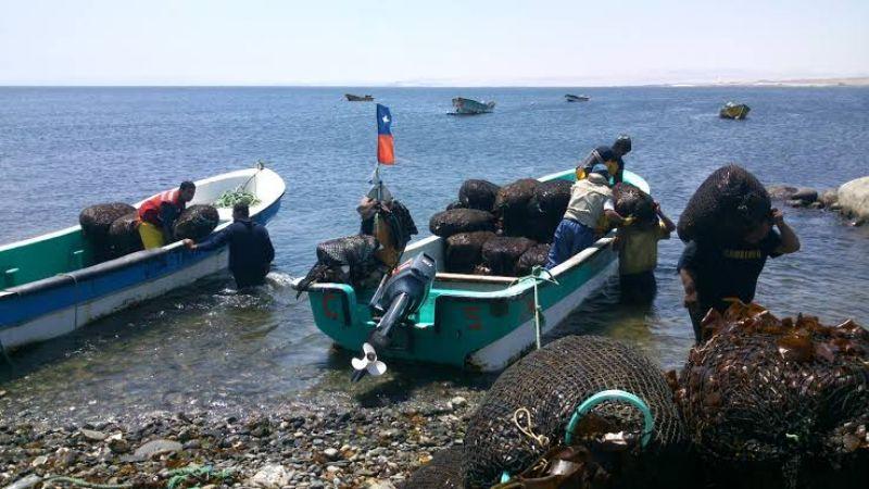 Baja California destaca en la captura del erizo de mar a nivel nacional