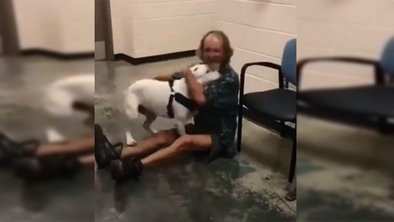 VIDEO: La emoción de un perro al reencontrarse con su dueño indigente