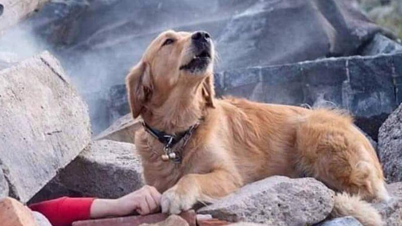 Perro busca desesperado a su dueño en los escombros de un edificio en Turquía
