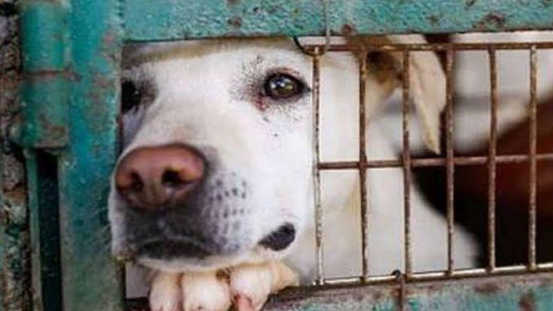Diputada del PRD propone reforzar sanciones por maltrato animal