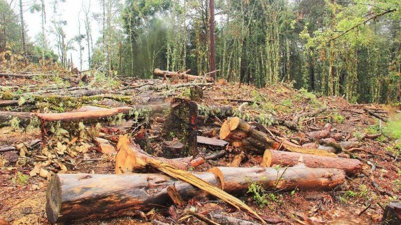 Distrito de Riego del Río Mayo logra convenio para evitar la deforestación