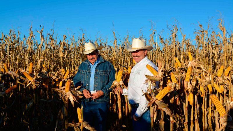 Sader y Cimmyt desarrollan 158 ensayos de maíz nativo y cultivos de milpa