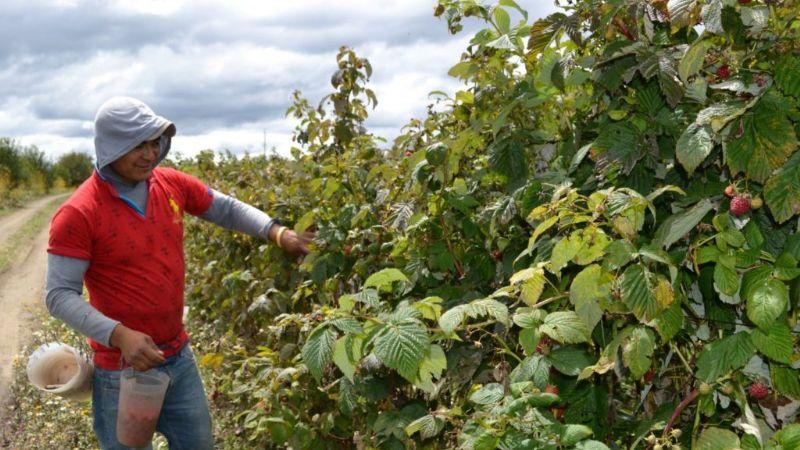 Baja California, en tercer lugar a nivel nacional en producción de berries