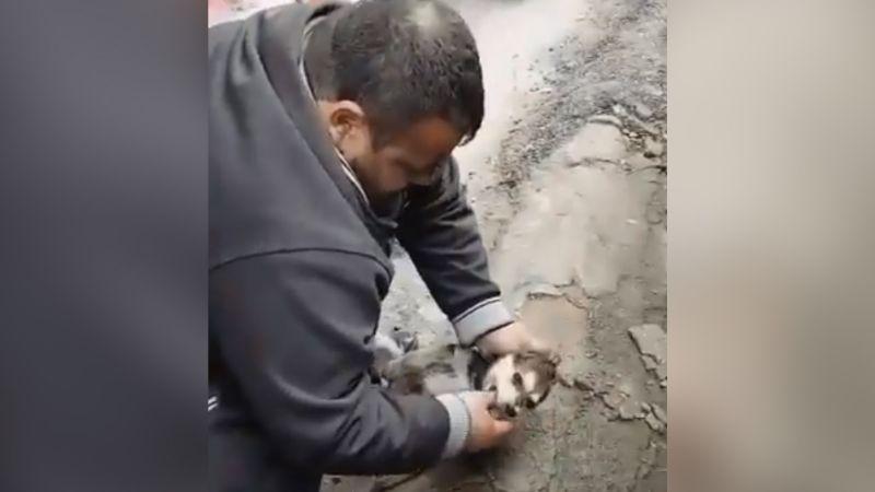 VIDEO: Hombre salva la vida de cachorro que sufrió paro cardíaco