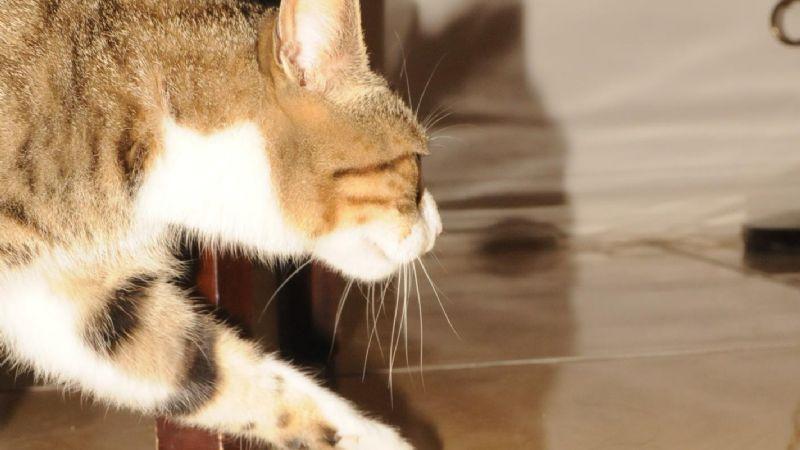 En diciembre repuntó extravío de mascotas por pirotecnia
