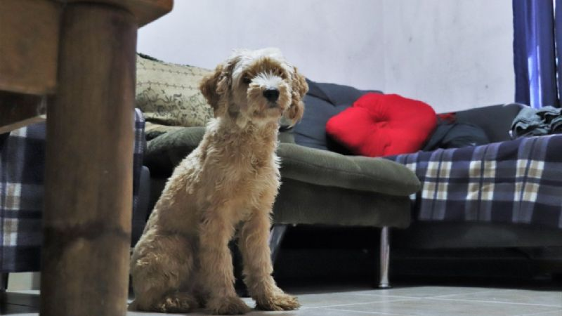 Organizaciones protectoras  buscan evitar agresiones en mascotas
