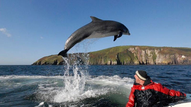Misterio en Irlanda: Desaparece delfín de 37 años muy querido por los turistas