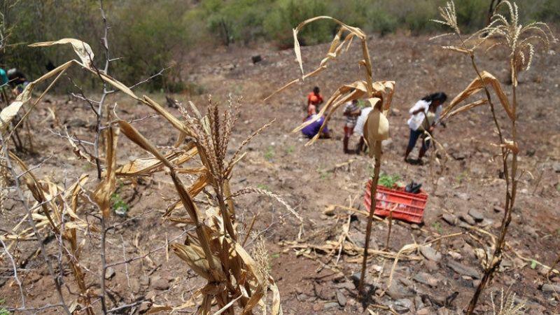 Sequía y deforestación ponen en riesgo el sector primario del estado