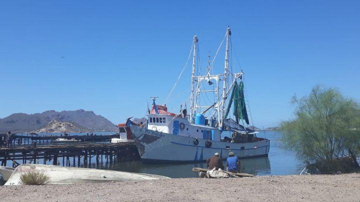 Temporada de camarón para ribereños del Puerto 'se acabó'