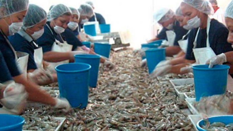 Llaos Acuacultura es un ejemplo de la industria en el estado de Sonora