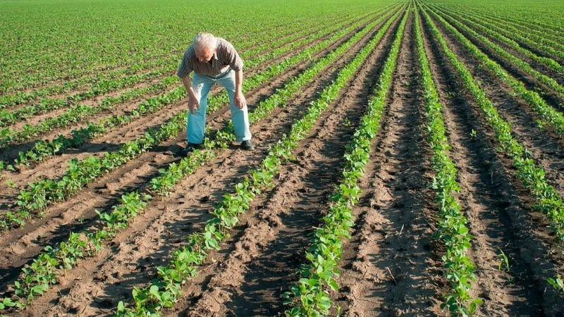 Sector hortícola es el gran eslabón de la cadena económica sonorense