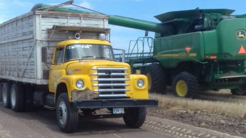 Transportistas luchan por obtener el 100% los acarreos de trigo de la temporada