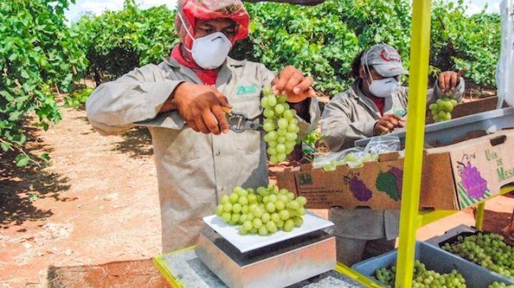 La sanidad, la clave del éxito en las exportaciones agrícolas sonorenses