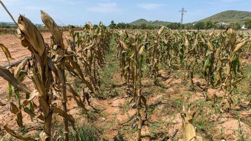 Sequía y recortes al campo ponen en riesgo la rentabilidad del PIB de Sonora