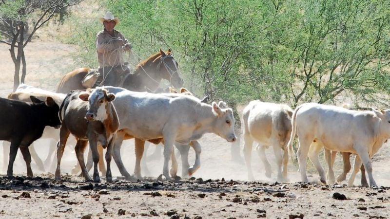 Sagarhpa busca una alianza con diputados para salvar la ganadería de Sonora