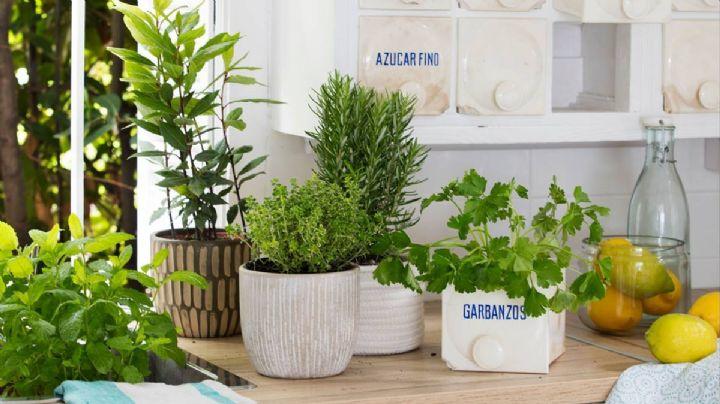 Decora y cocina con plantas dentro del hogar