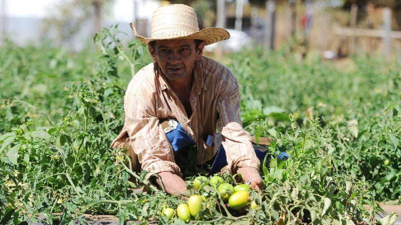 Investigación agropecuaria, el camino a la soberanía alimentaria