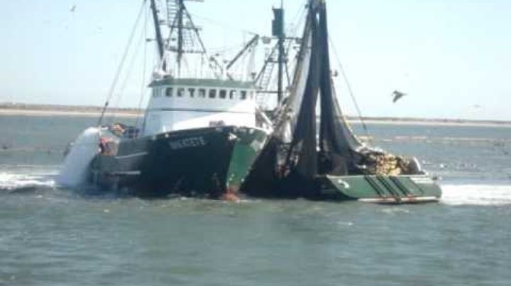 Sardineros son denunciados por capturar en la bahía y playas