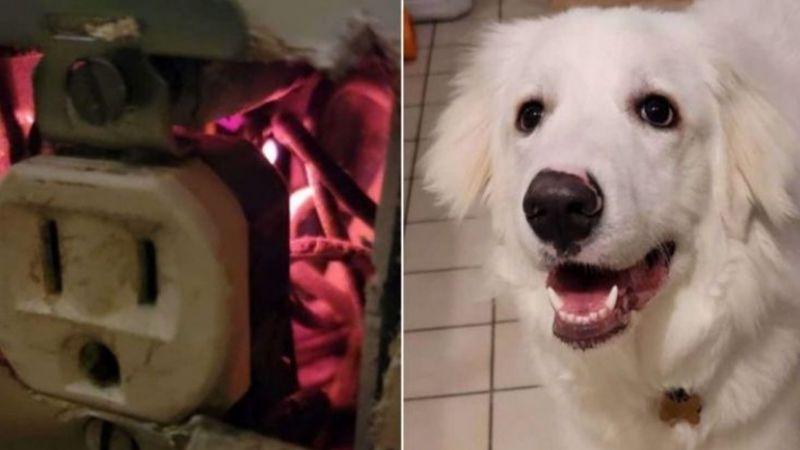 Conoce la historia de Willow, la valiente perrita que salvó a su familia de un incendio