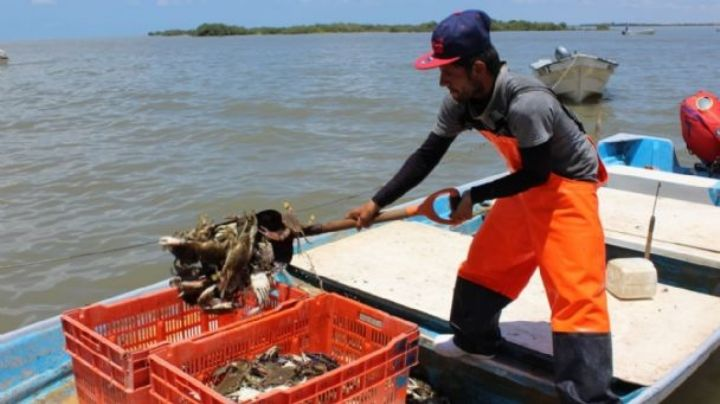 Captura de camarón repunta en aguas costeras del sur del Estado