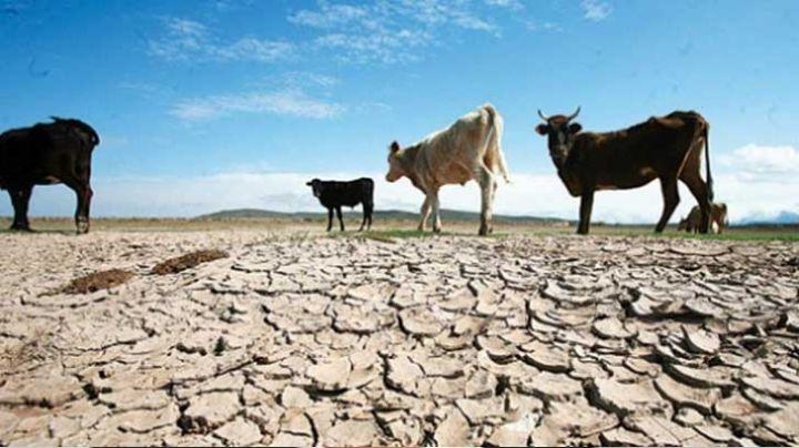 Ganaderos en 'peligro de extinción' en el valle por la sequía en la región de Empalme y Guaymas