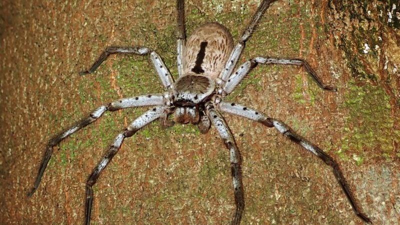 FOTO: Joven australiano encuentra enorme araña gigante en el garaje de su casa