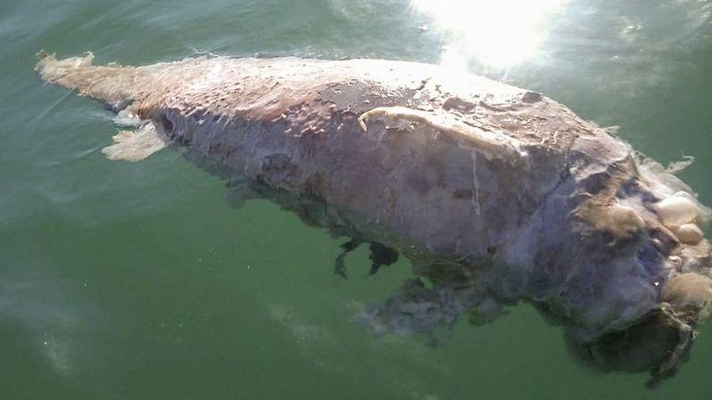 Pescadores están en tensión por la vaquita marina