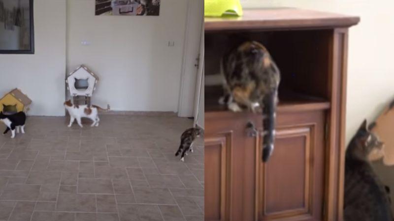 VIDEO: Gatitos callejeros enternecen ante su reacción al entrar a una casa por primera vez