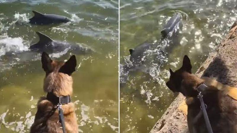 VIDEO: ¡Conmovedor! Un perro se emociona al ver, por primera vez, delfines nadando