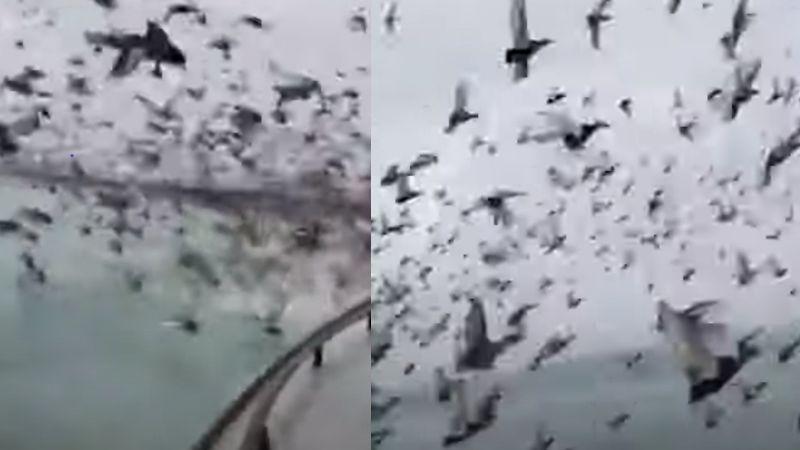 Terror en Rusia: Se viraliza video con miles de patos al volar y rodear embarcación
