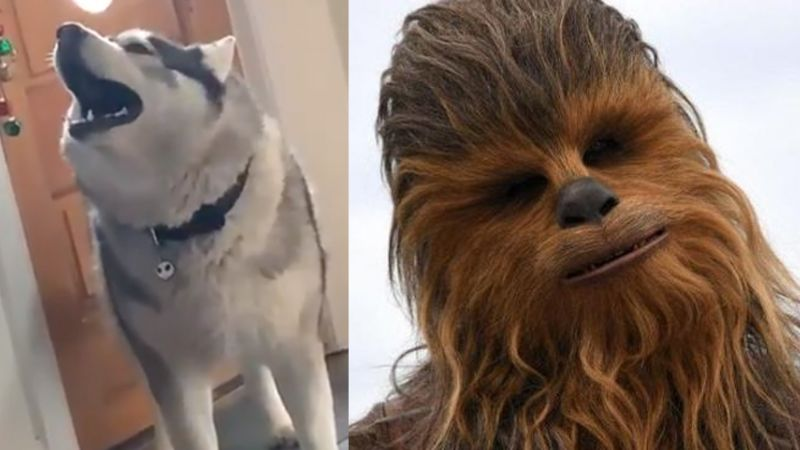 VIDEO: El ladrido de un perro se hace viral al sonar igual que 'Chewbacca' en 'Star Wars'
