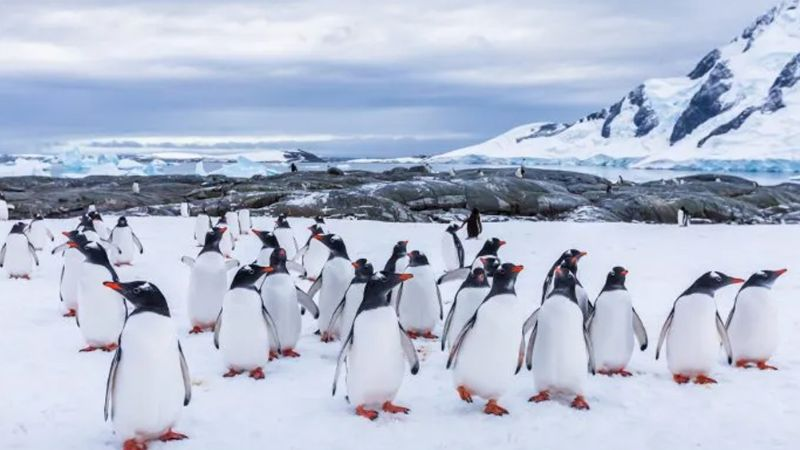 El iceberg más grande del mundo podría acabar con la vida silvestre del Antártico Sur
