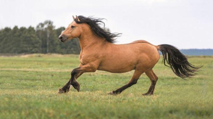 FOTOS: Impactantes fotos de un caballo camaleón conmocionan las redes sociales