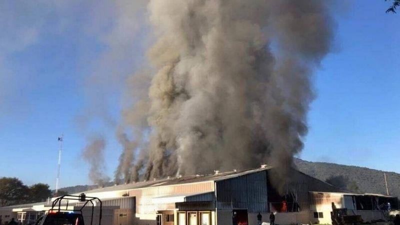 Michoacán: Sicarios incendian empacadora de aguacate por no pagarles 'derecho de piso'