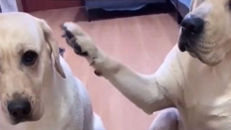VIDEO: Perritos se delatan entre sí, al ser sorprendidos por su amo haciendo travesuras