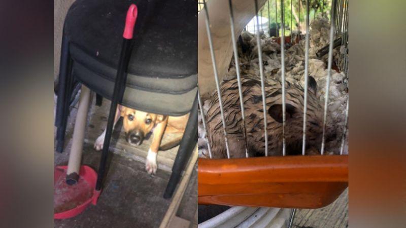 Perro y hámster son salvados de morir quemados luego de registrarse un feroz incendio