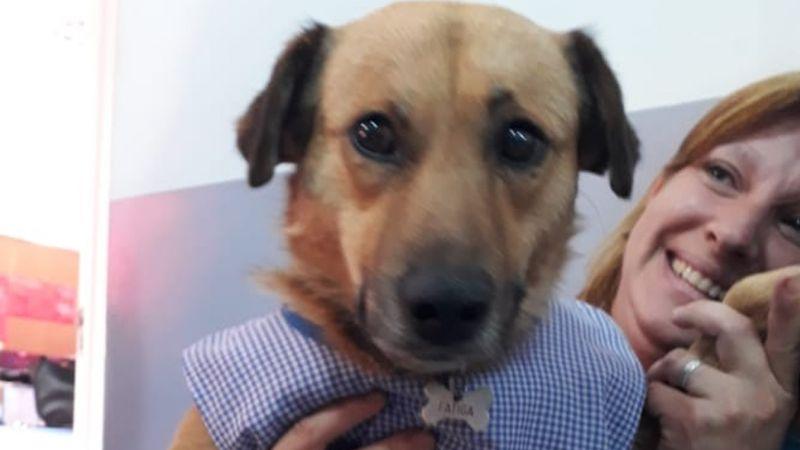 FOTOS: Jardín de niños adopta a perro callejero y es nombrado abanderado