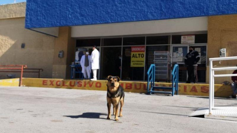 'Covito', el perro que enternece al esperar fuera del hospital a su fallecido por Covid-19