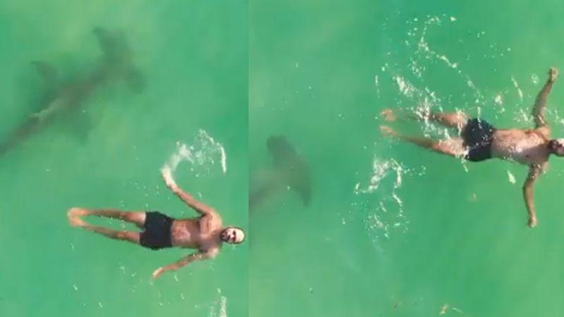 VIDEO: Dron capta el momento en el que nadador se topa con tiburón de 3 metros