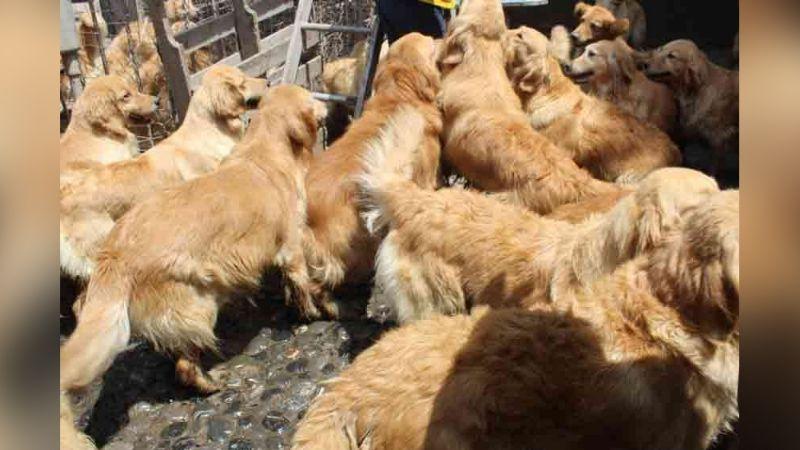 EU pone en marcha operación y salva 20 perros de ser vendidos a carnicería en China