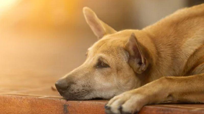 Caso de perrita enterrada viva en lote baldío causa indignación en redes sociales