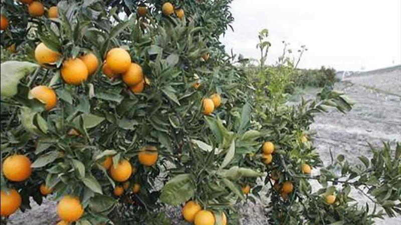 Reconversión de cultivos, una estrategia favorable pero tardada