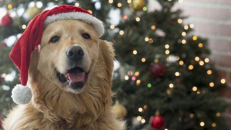 VIDEO: Perros se apoderan de TikTok tras lanzarse este adorable filtro navideño