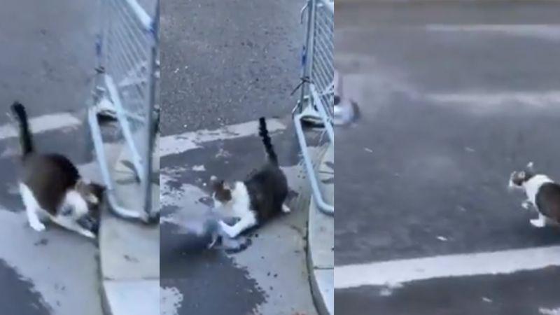 VIDEO: Gato es captado al lanzarse y atrapar a paloma frente al hogar de Boris Johnson